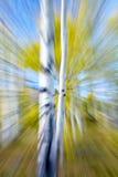 Aspen-Zusammenfassungszoomunschärfe Stockfoto