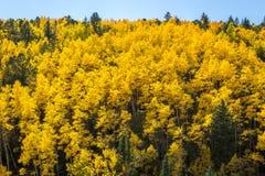 Aspens το φθινόπωρο Στοκ εικόνες με δικαίωμα ελεύθερης χρήσης