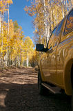 Aspens Royalty Free Stock Photos