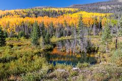Aspens Along the Bachelor Loop, Creede Colorado. Golden aspens line the road in Creede Colorado, reflections in the pond stock images