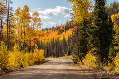 Aspens Along the Bachelor Loop, Creede Colorado. Golden aspens line the road in Creede Colorado, reflections in the pond royalty free stock photo