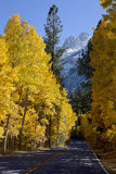 Aspens Along Highway Royalty Free Stock Photography