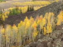 Aspens in autumn. Colorful Aspens in Autumn in the Utah mountains Stock Photography