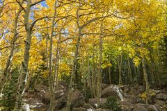 Aspens and Boulders in Rocky Mountain National Park Stock Images