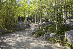 Aspens on Dream Lake Trail Stock Image