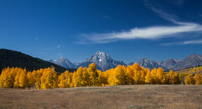 Aspens in full fall color Stock Images