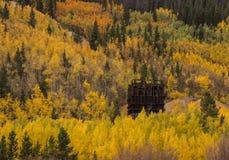 Aspens near Breckenridge Royalty Free Stock Images