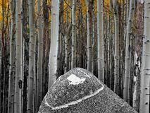 Aspens and Rock. Aspens behind a triangular rock. Taken in New Mexico above Taos Royalty Free Stock Photography