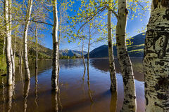 Aspens in Smith and Morehouse. This photo was taken at Smith and Moorehouse reservoir in Utah Royalty Free Stock Images