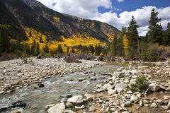 Aspens and Stream Royalty Free Stock Photos