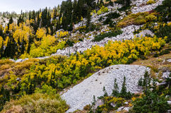 Aspens and Subalpine Firs Stock Images