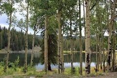 Aspens Surrounding the Lake on Grand Mesa stock photo