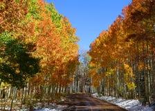 Aspens trail Stock Photo