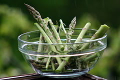Asperge - officinalis d'asperge Photographie stock libre de droits