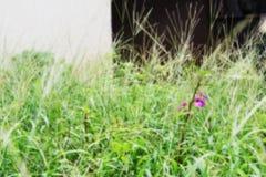 Asperje de color Fotografía de archivo libre de regalías