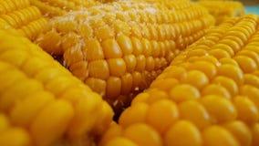 Asperje el maíz de oro con la sal, vegetariano orgánico de la cámara lenta almacen de video