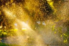 Asperje en el parque Descensos del agua en las plantas Fotografía de archivo