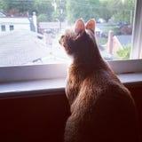 Aspettando il mio compagno dello scoiattolo Fotografie Stock