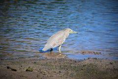 Aspettando un pesce Fotografie Stock
