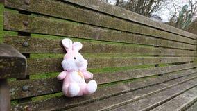Aspettare del coniglio voi da sedersi dopo Fotografia Stock