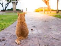 Aspettare del gatto il proprietario Fotografie Stock