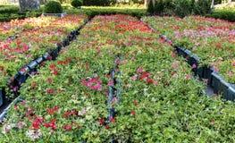 Aspetti per la piantatura dei letti di fiore Fotografia Stock Libera da Diritti