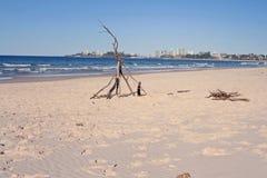 Aspetti per un fuoco di accampamento della spiaggia Immagine Stock