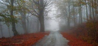 Asphalt autumn road. An asphalt autumn road in the forest stock photography