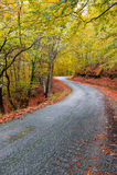 Asphalt autumn road Stock Images