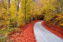Asphalt autumn road Stock Photos