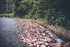 The asphalt concrete road to the nature with tropical forest Royalty Free Stock Photography