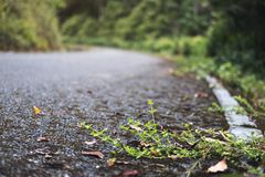 The asphalt concrete road to the nature with tropical forest Royalty Free Stock Photos