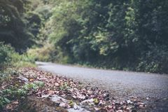 The asphalt concrete road to the nature with tropical forest Stock Photos