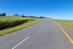Asphalt Country Road Running Through Sugar Cane Fields photos stock