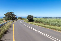 Asphalt Country Road Running Through Sugar Cane Fields photographie stock