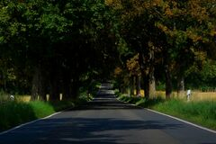 Asphalt Empty Road in Between of Tall Trees Stock Images