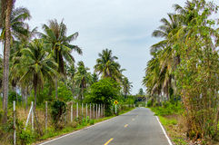 Asphalt highway in jungle in along palm trees Thailand Royalty Free Stock Photo