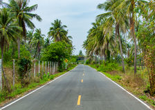 Asphalt highway in jungle in along palm trees Thailand Stock Images