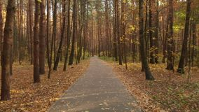 Asphalt path in the autumn deciduous forest stock video footage