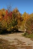 Asphalt path in autumn park Stock Images