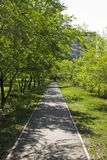 Asphalt path in the city Park royalty free stock image