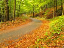 Asphalt path leading among the beech trees at near autumn forest surrounded by fog. Rainy day. Royalty Free Stock Images