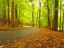Asphalt path leading among the beech trees at near autumn forest surrounded by fog. Rainy day. Royalty Free Stock Photos