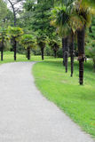 Asphalt path in the park. Asphalt path for jogging in the park Stock Photo