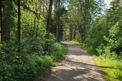 Asphalt path in the park in a summer day Royalty Free Stock Photo
