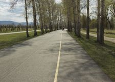 Asphalt path between trees stock images