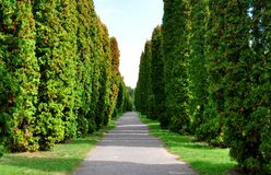 Asphalt path with trees growing on both sides. For your design royalty free stock images