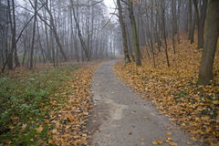 Asphalt path in the woods Royalty Free Stock Photography