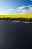 Asphalt - Rape field and blue sky Royalty Free Stock Photography