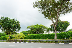 Asphalt road along with trees under a storm sky Royalty Free Stock Photo